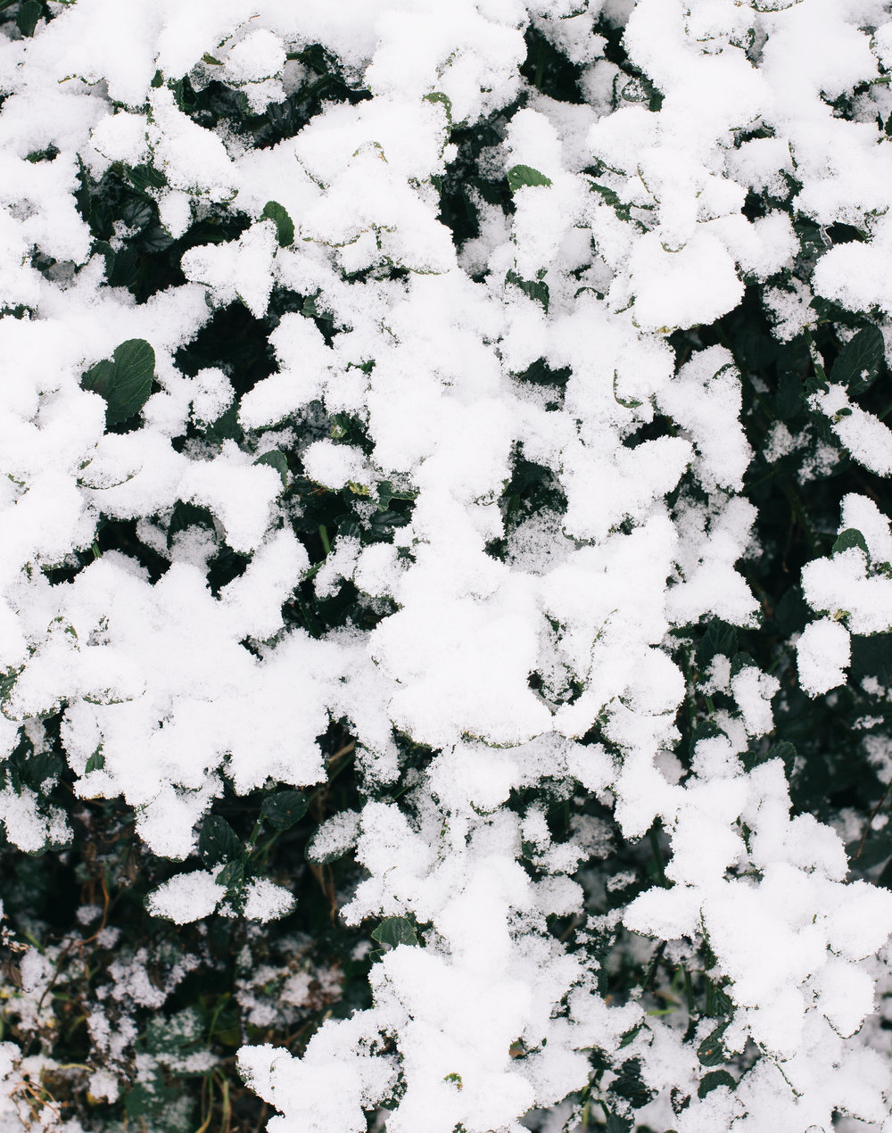 Snow-6.png