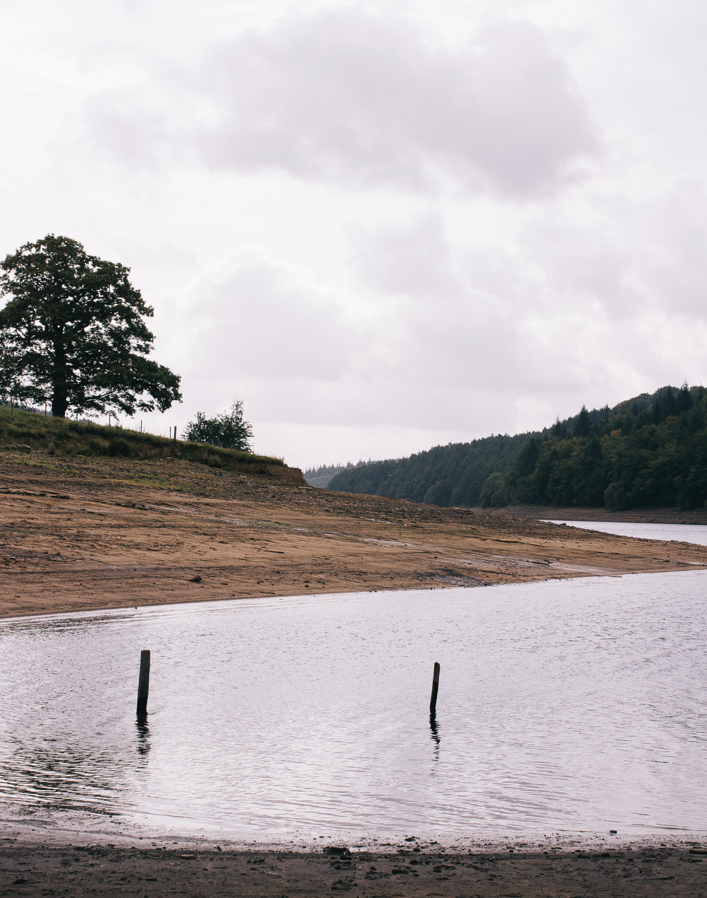 From-Roses---Ladybower-1.png