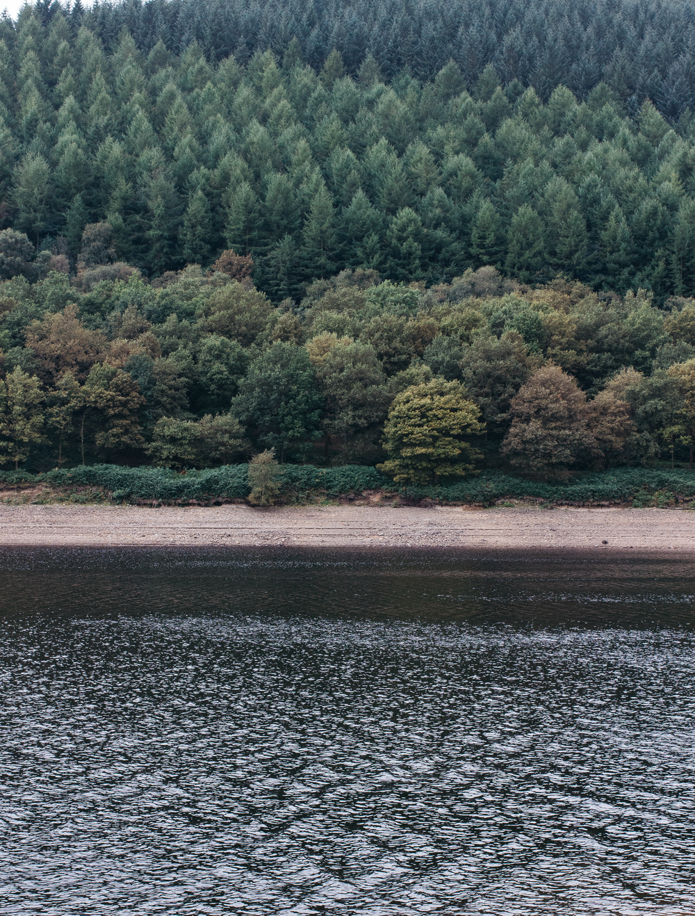 From-Roses---Ladybower---2.png