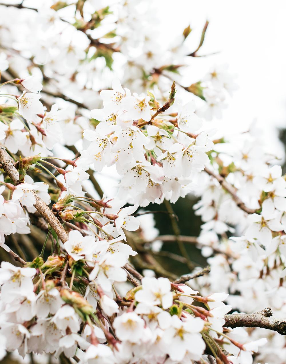 Spring-1.png