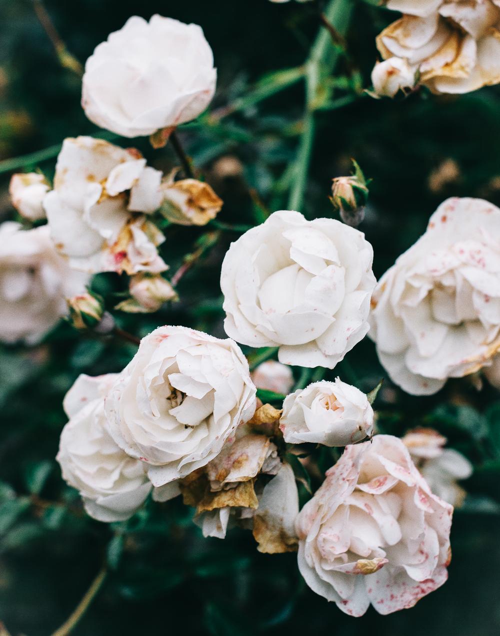 Wallflower-blogger-2.png
