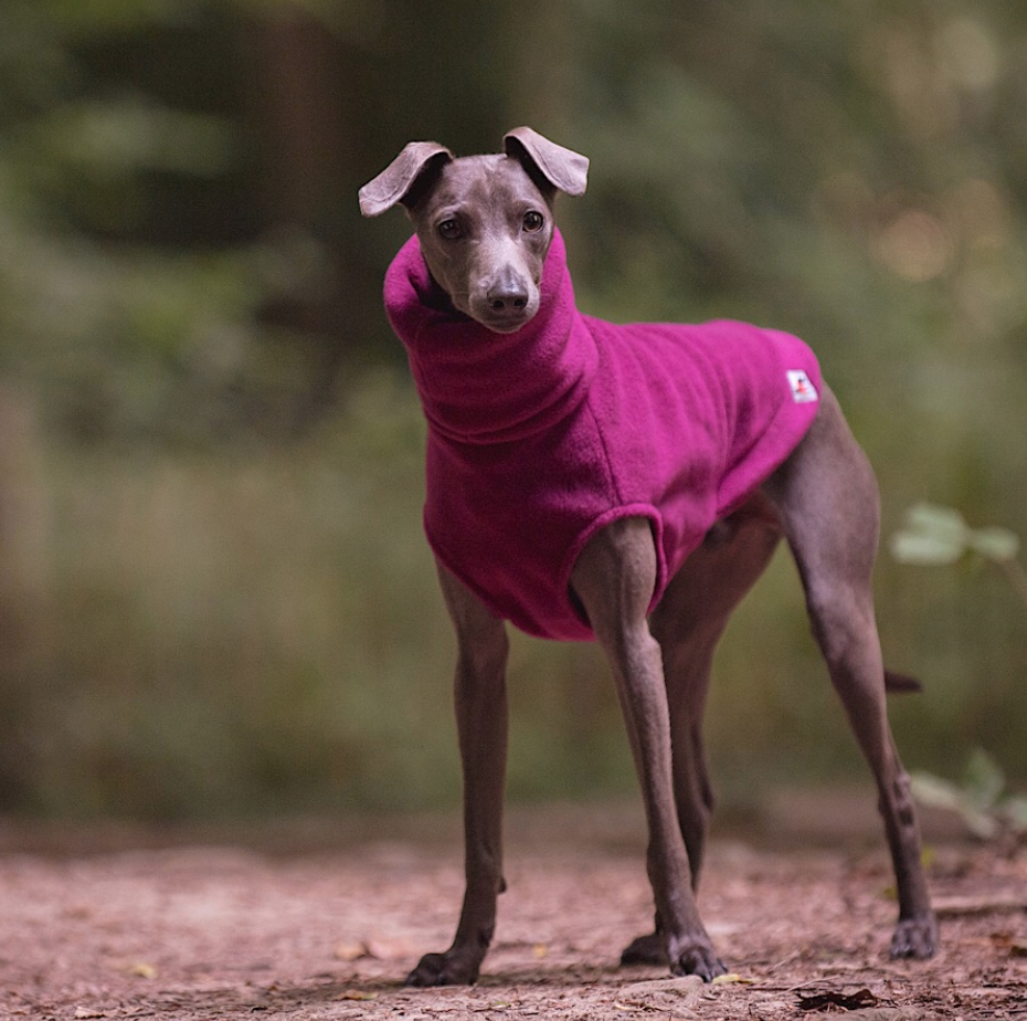 Redhound for Dogs