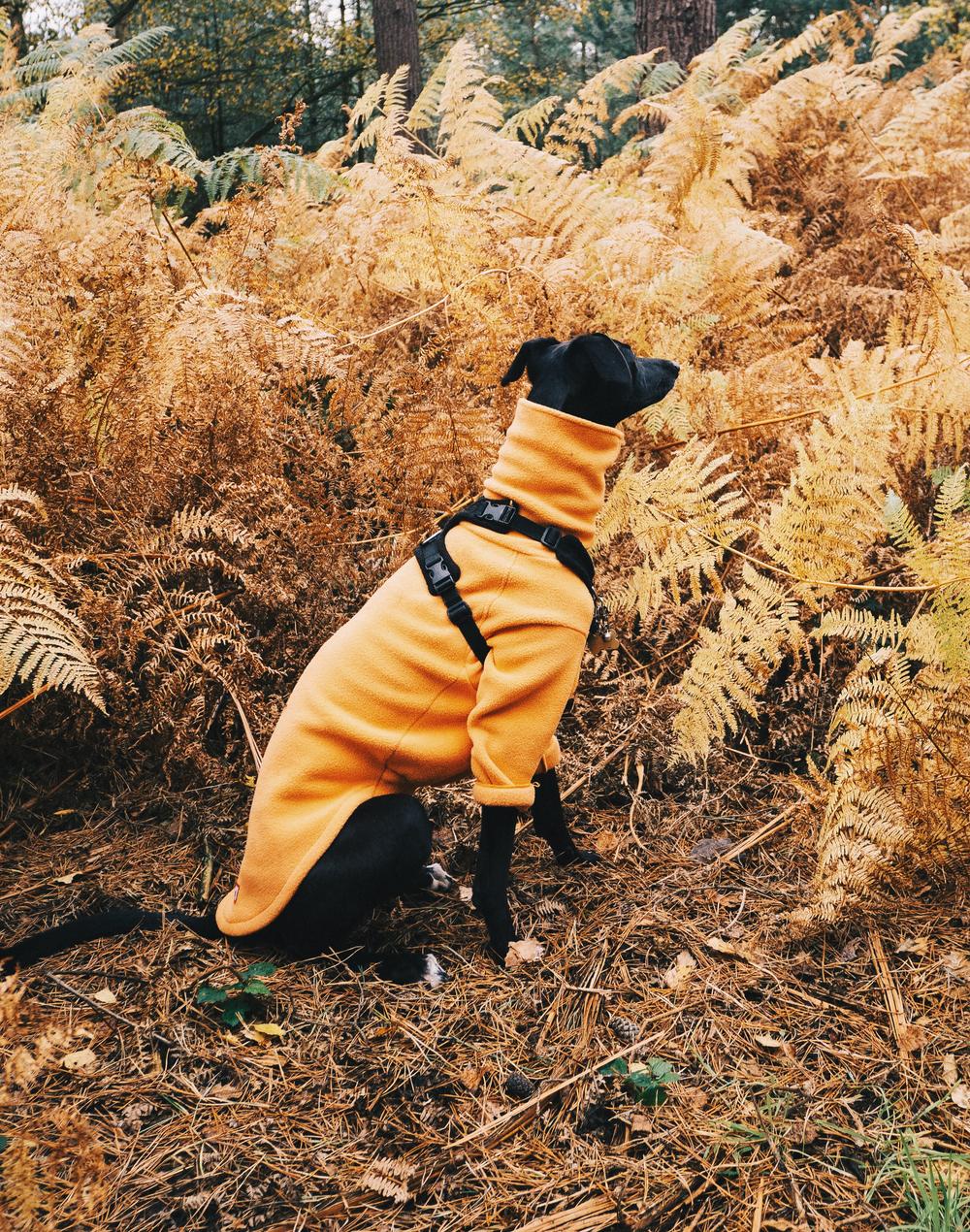 Dryhound