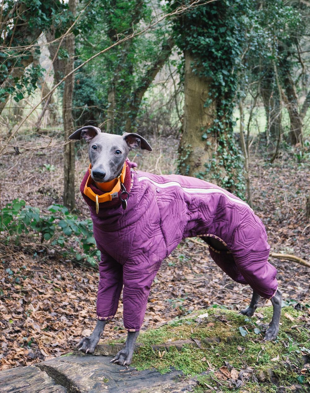 Hurtta Dog Suit