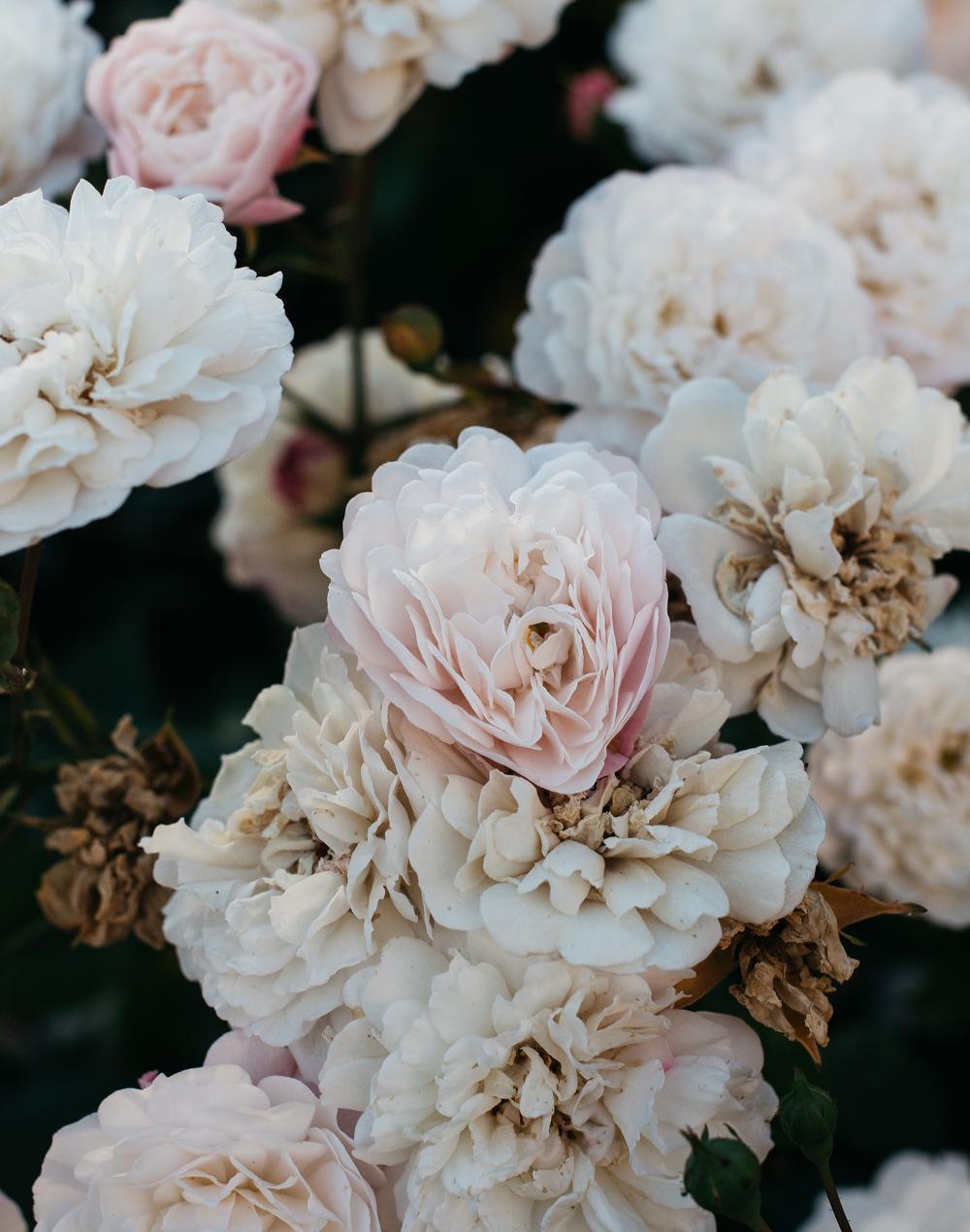 Florals-3.png