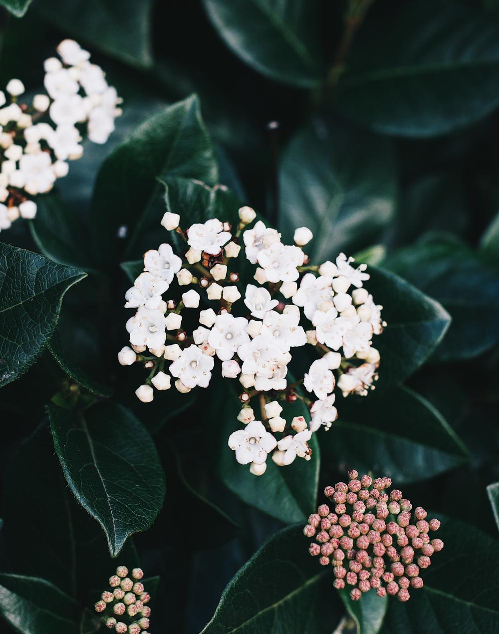 Florals-5.png