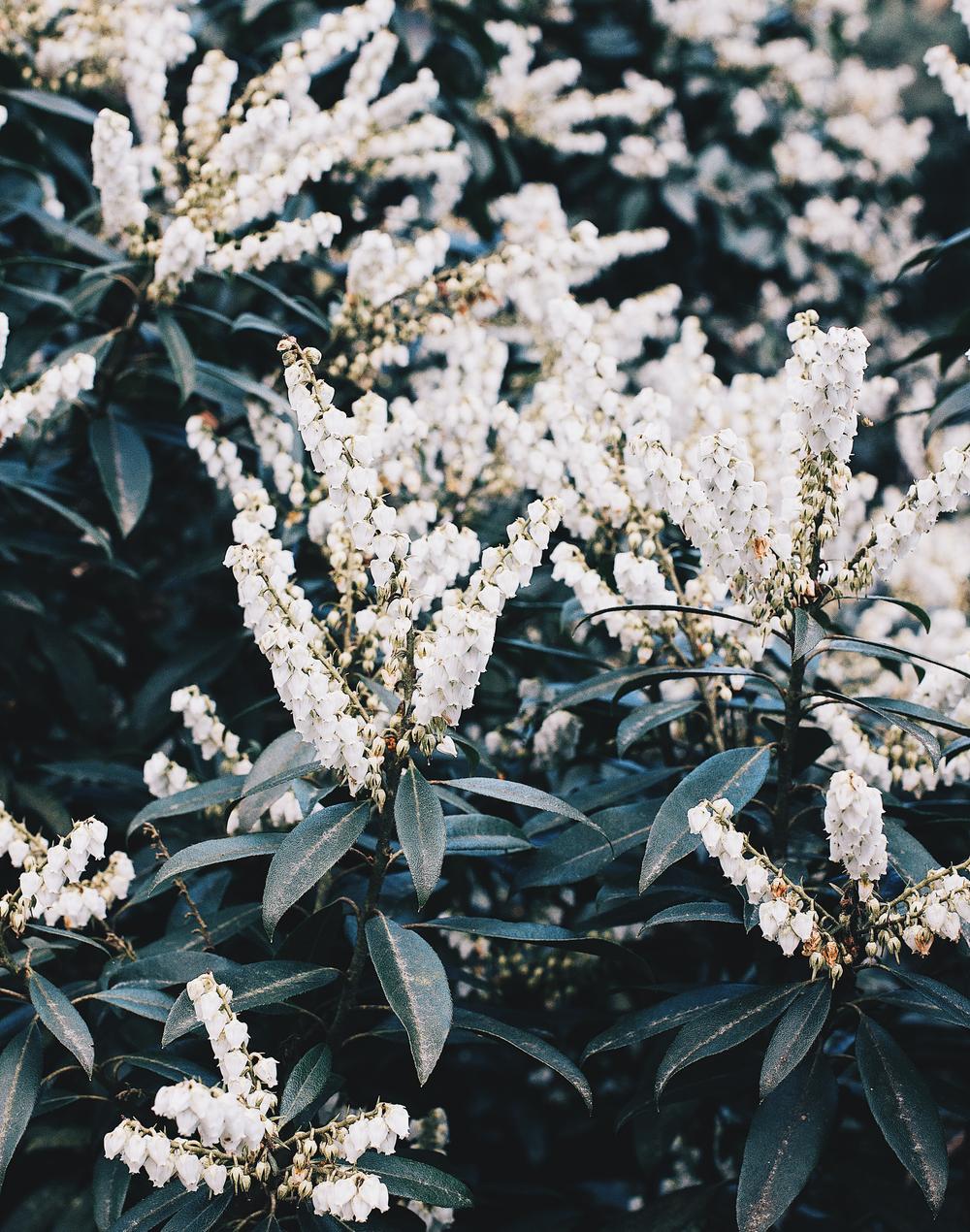 Florals-6.png