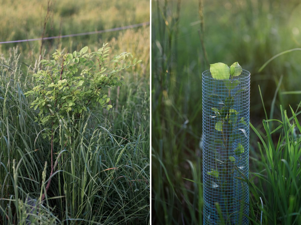 Emily Grace Photography, Lifestyle Portraits, Rising Locust Farm, Organic Permaculture Farm, Lancaster PA