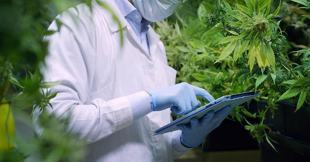 CannabisPic.jpg