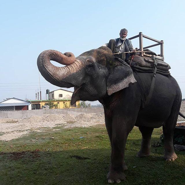 Our elephant Rupa. #elephants