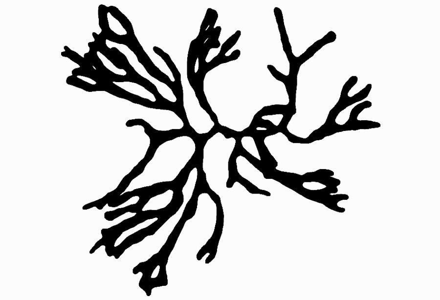 codium_plant.jpg