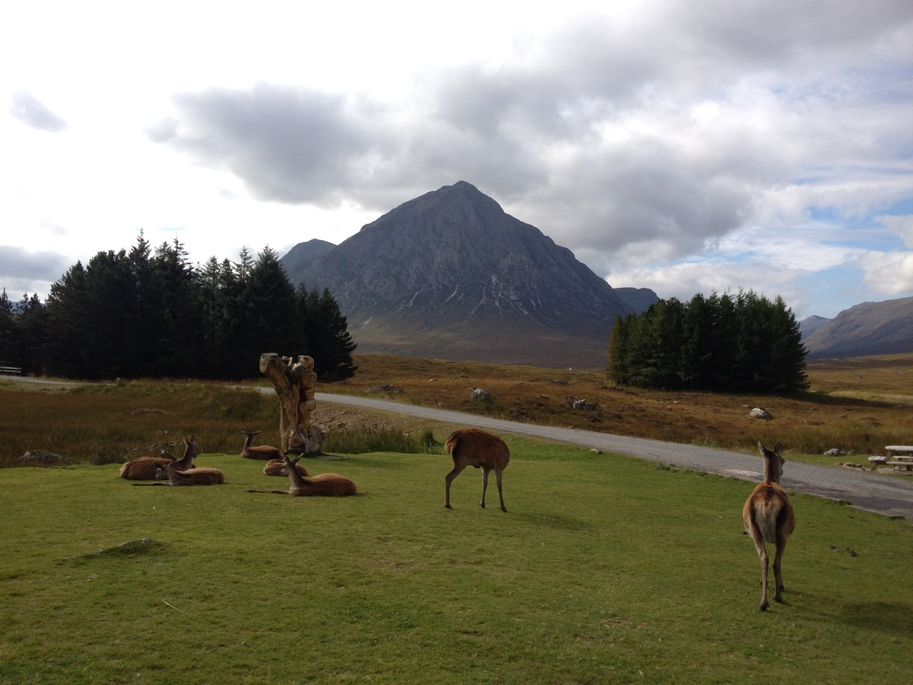 deer-at-kingshouse-glencoe