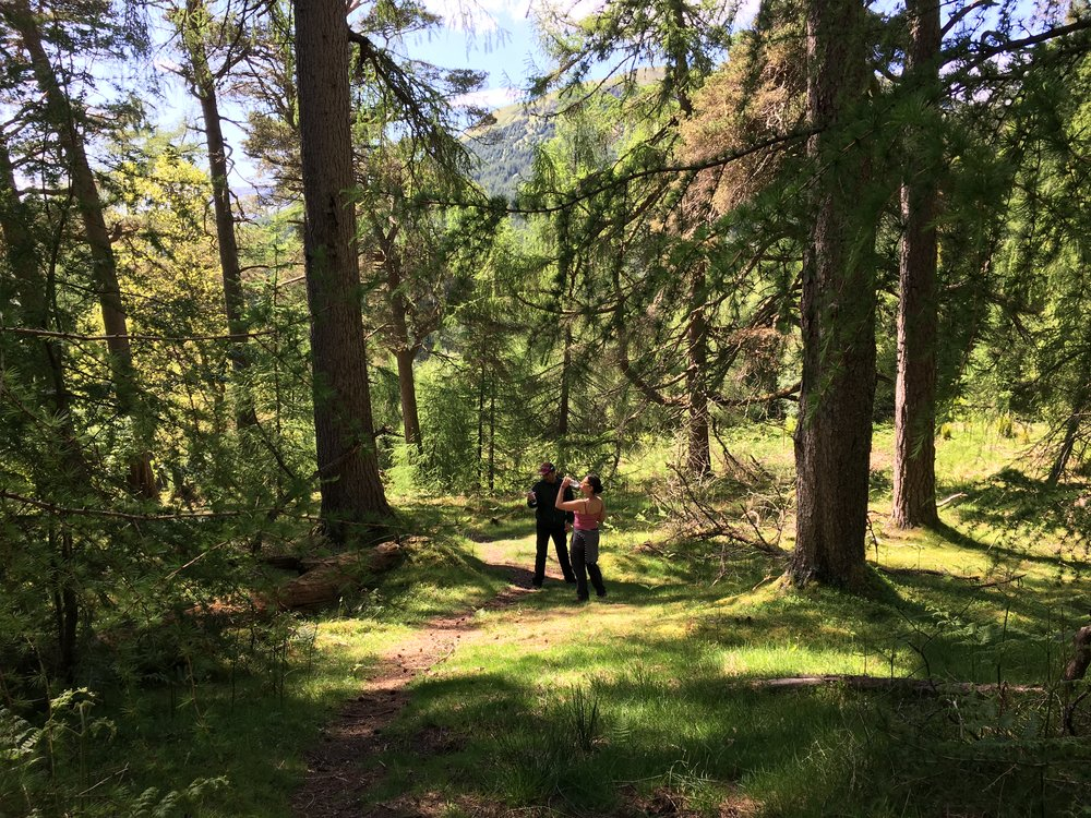 forrest-walking-in-balquhidder-glen