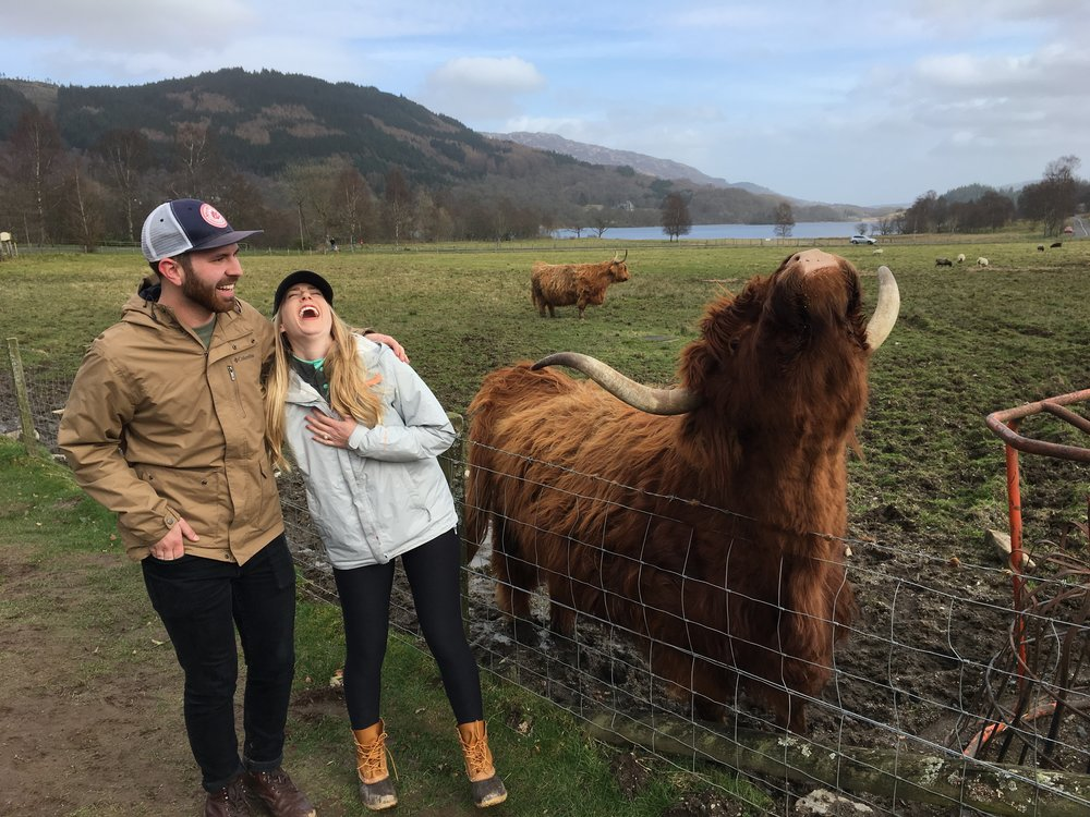 laughing with a highland cow