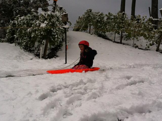 Vineyard Sled Hill Open Daily for Fun!!!