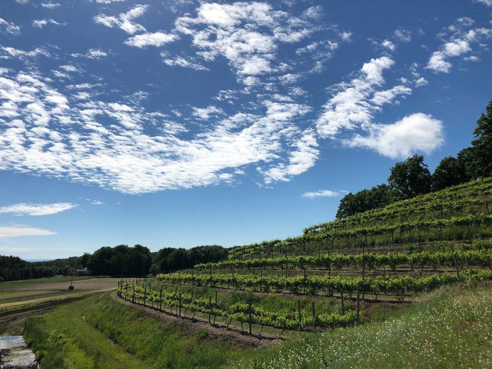 Sunset Vineyard in Summer.jpg