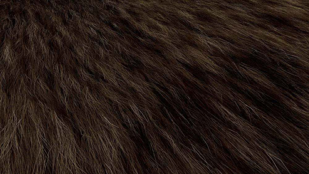 Hair Fur