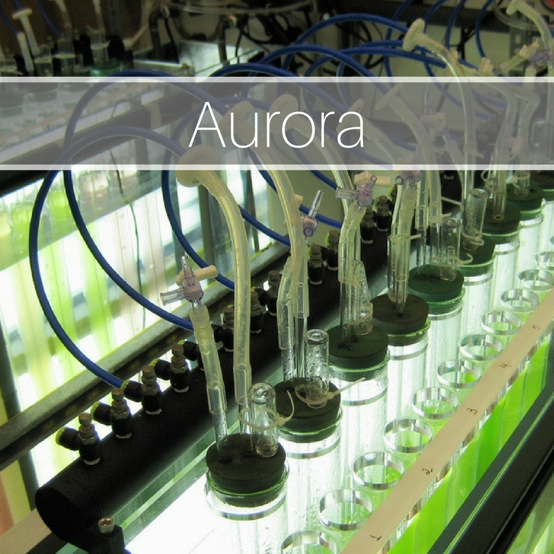 Aurora Biofuels: Media Strategy, Messaging, Creative Content