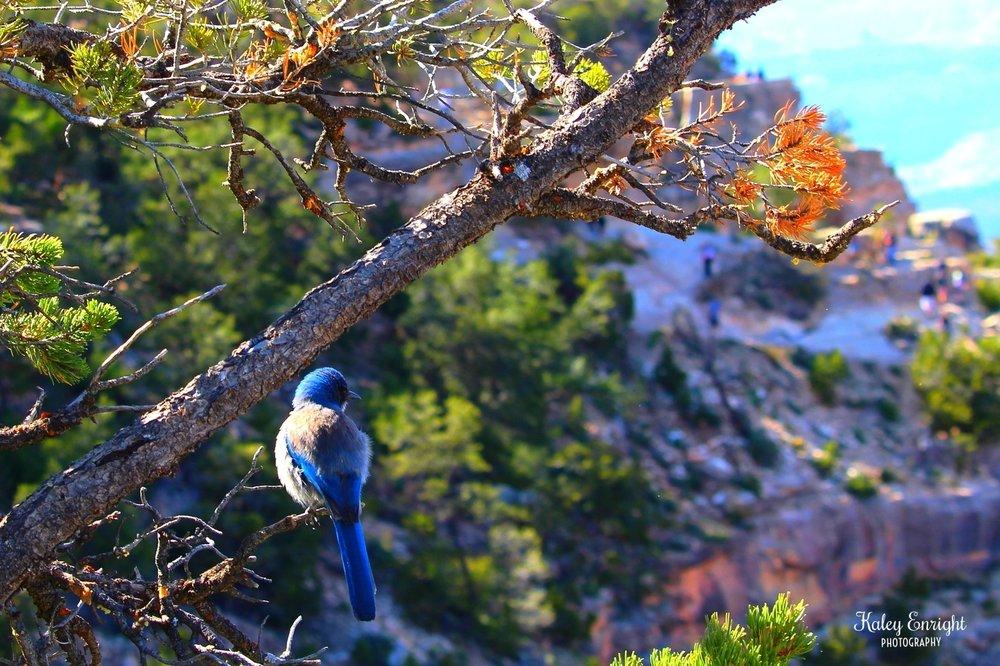 Kaley+Enright+Photography+Grand+Canyon+Bluebird.jpg