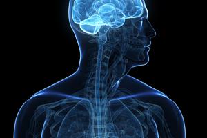 nervous-system-200-300