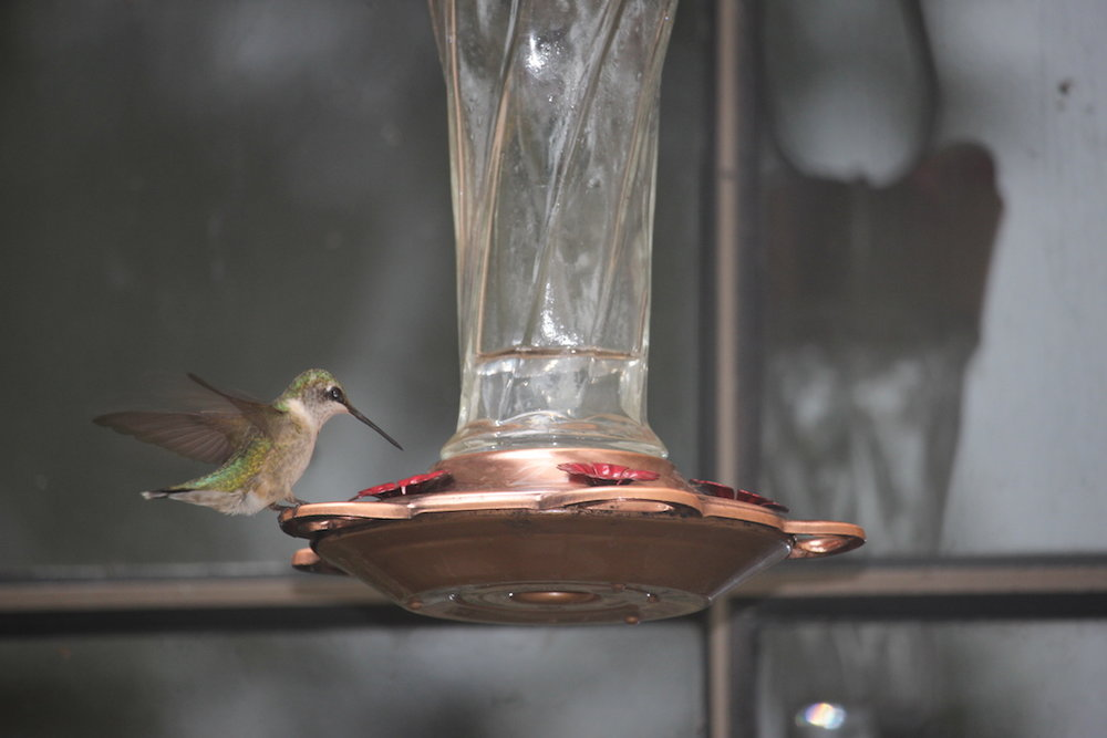 Santos Hummingbird 3.jpg