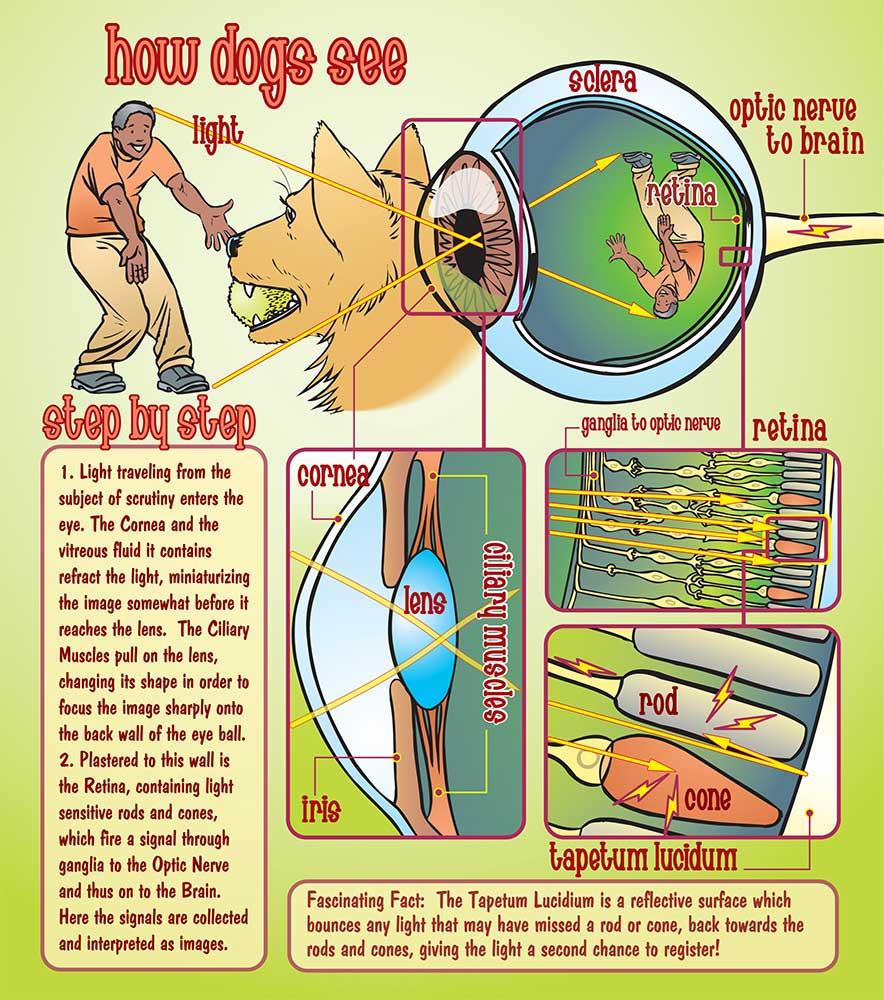 Dog+Sees+Man+1000.jpg