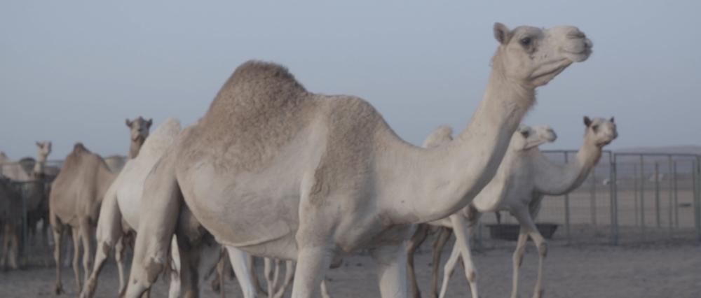 Sara al arab land rover_1.43.1.jpg