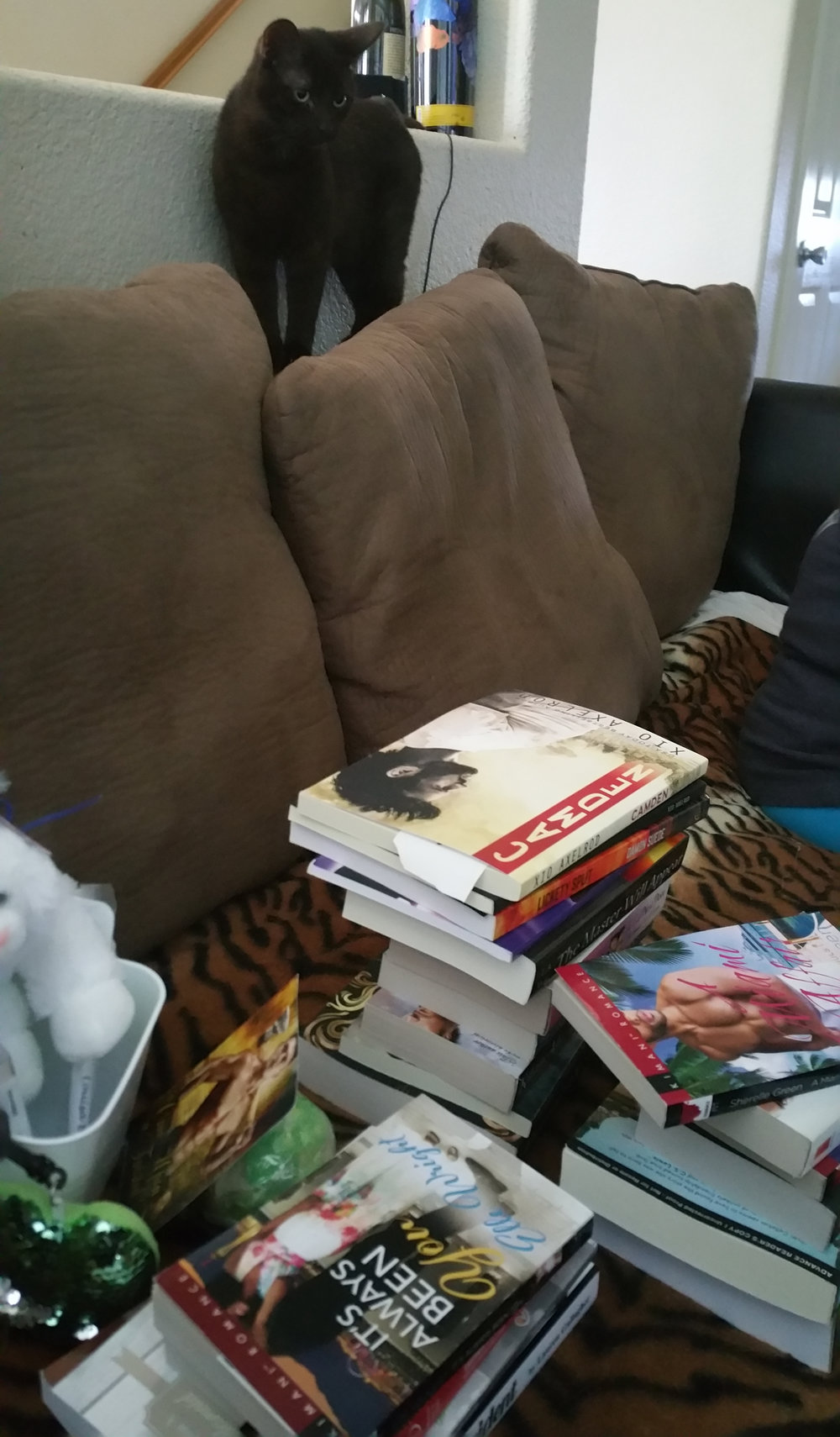 Dresden wants to know WTF happened to his nap spot and who dared put all books there!