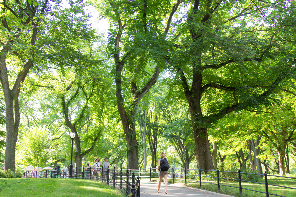 A lush green path in Central Park.