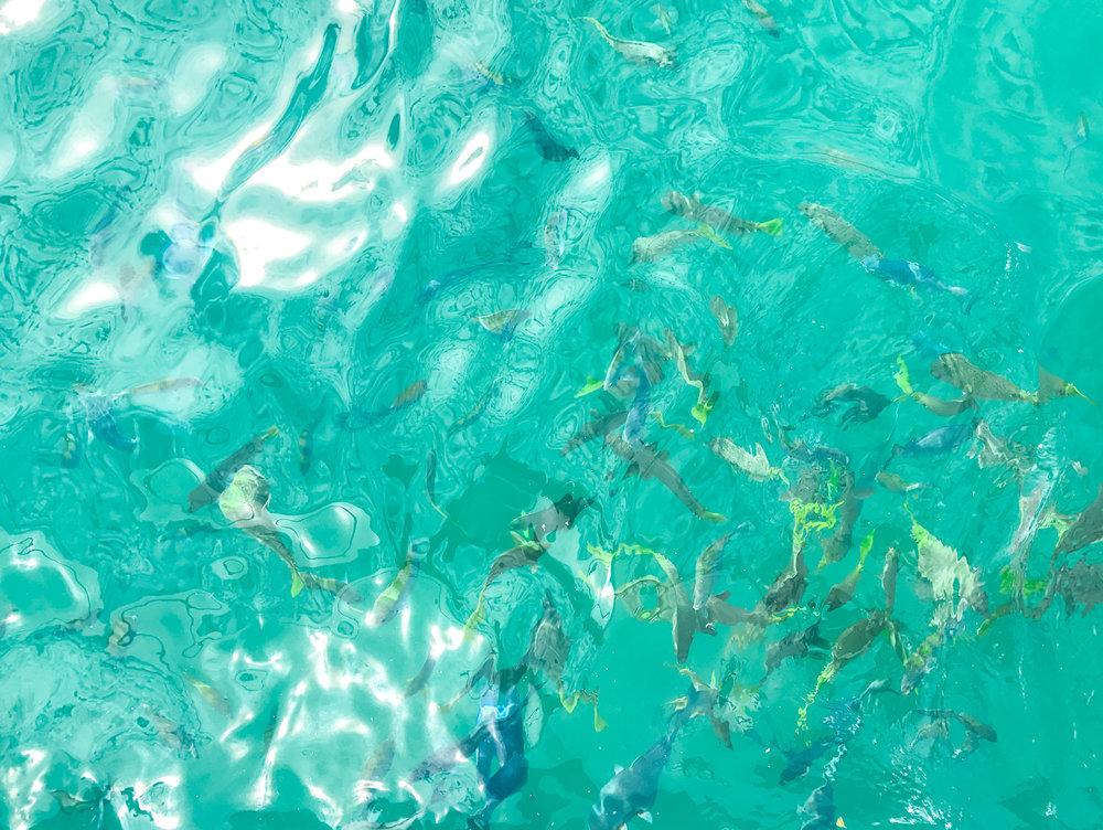 Snorkeling | Cabo San Lucas, Mexico