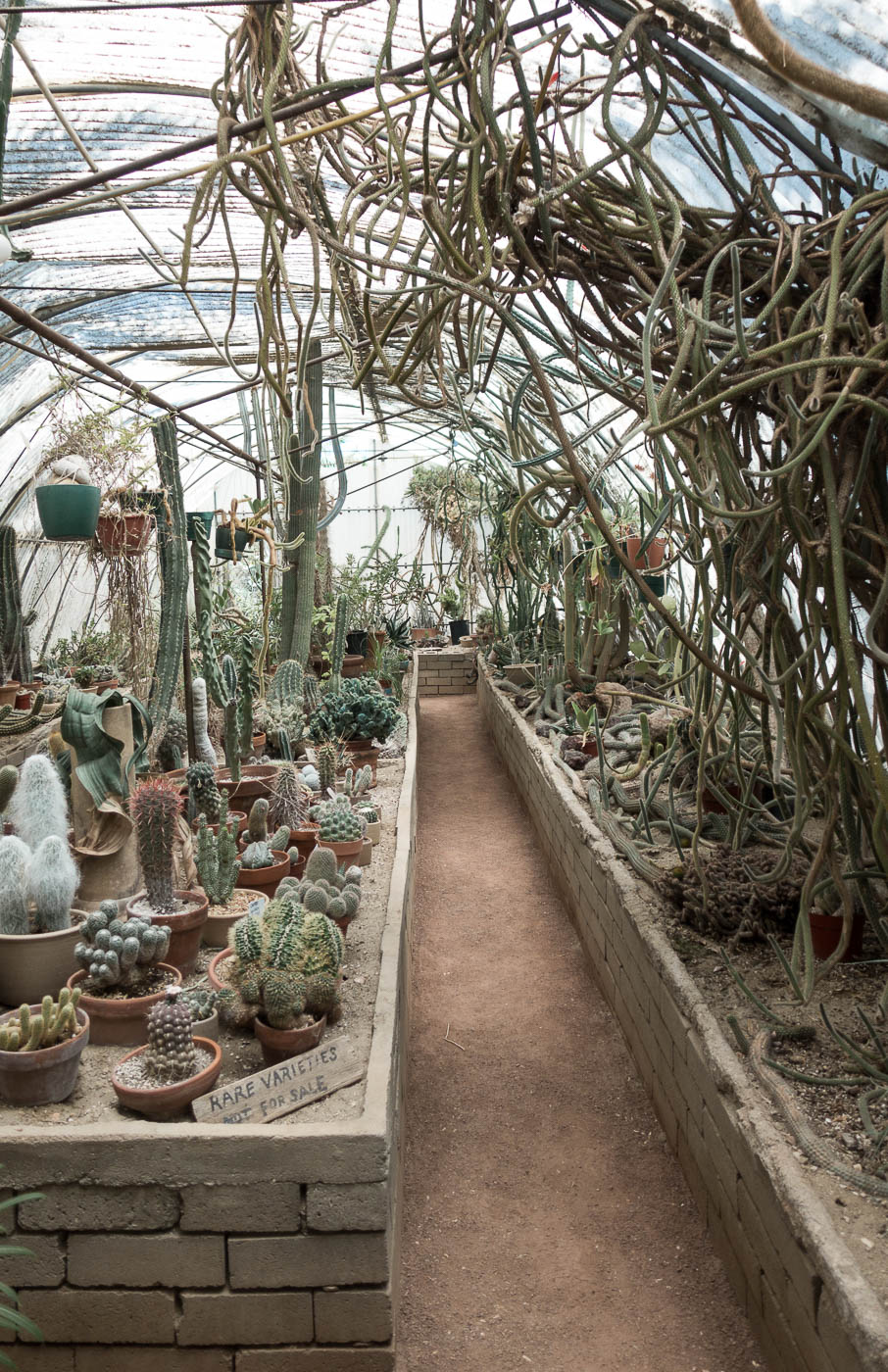 Cactarium at Moorten Botanical Garden | The Chic Diary.jpg