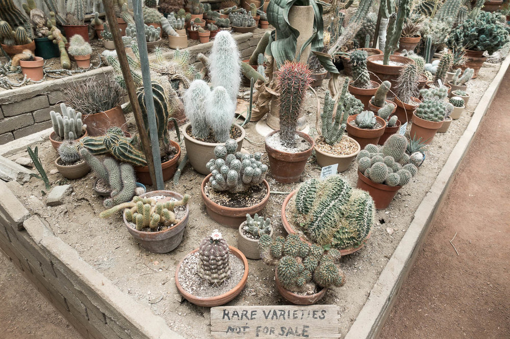 Cactarium at Moorten Botanical Garden 2 | The Chic Diary.jpg