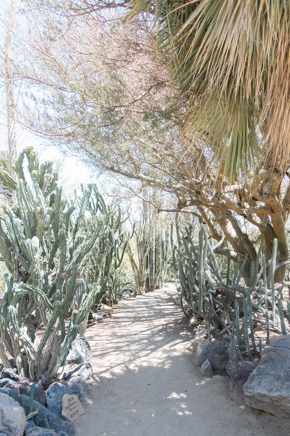 Cacti - Moorten Botanical Garden.jpg
