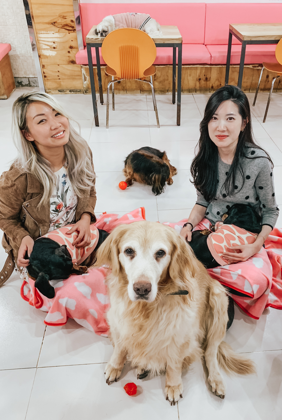 카페 개네 Myeongdong Dog Cafe | Seoul, Korea Travel Guide | The Chic Diary