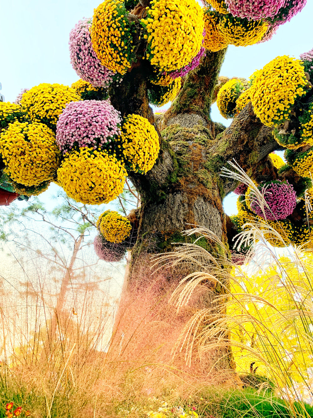 Autumn Chrysanthemum Festival at Jogyesa Temple | Seoul, Korea Travel Guide | The Chic Diary