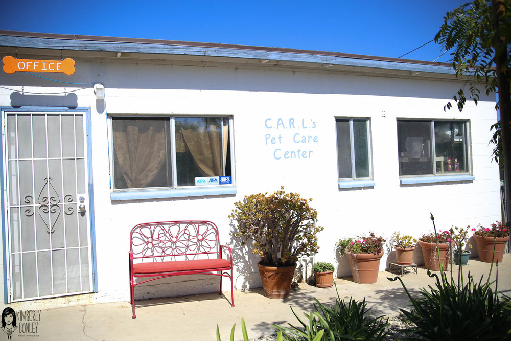 carls pet care center experienced loving care for your pets