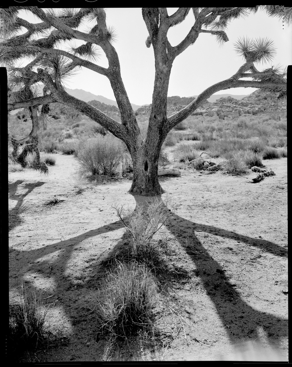 jtree.shadow.jpg