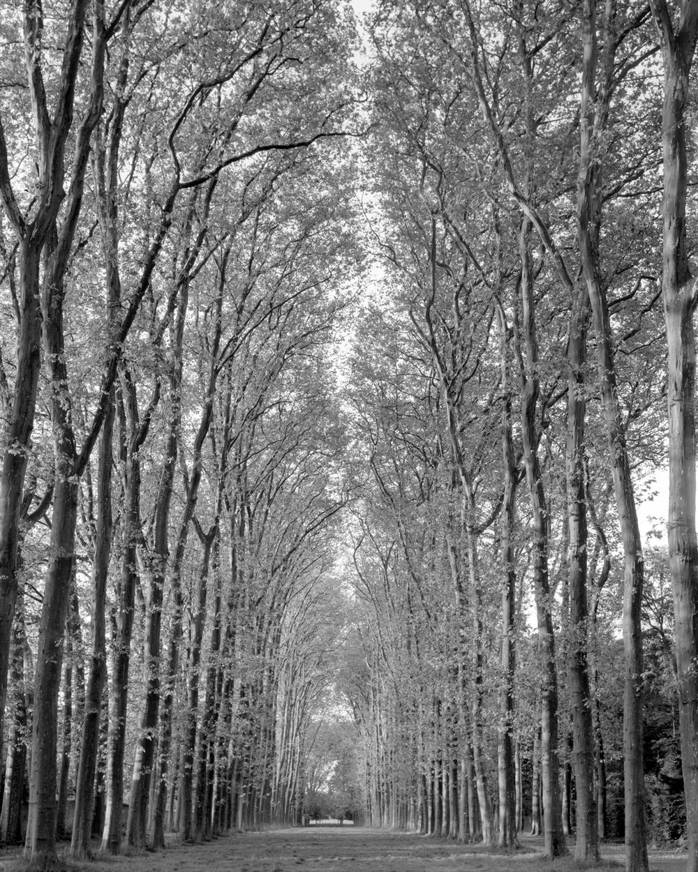 trees_versailles.jpg