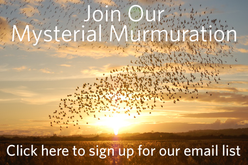 join-our-mysterial-murmuration