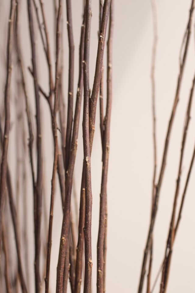 Wood Sticks.jpg