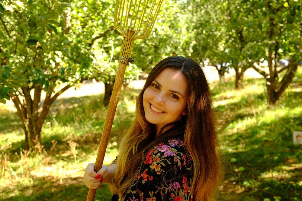 Apple Picking at Apple Hill | Kaci Nicole