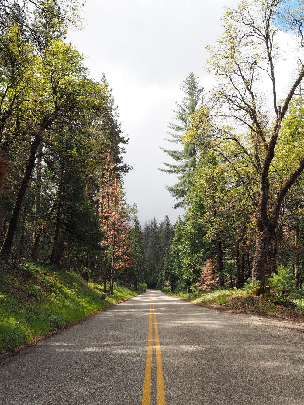 Drive to Yosemite | Kaci Nicole.jpg