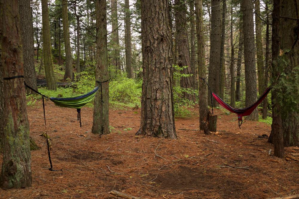 Hammocks Camping | Kaci Nicole.jpg