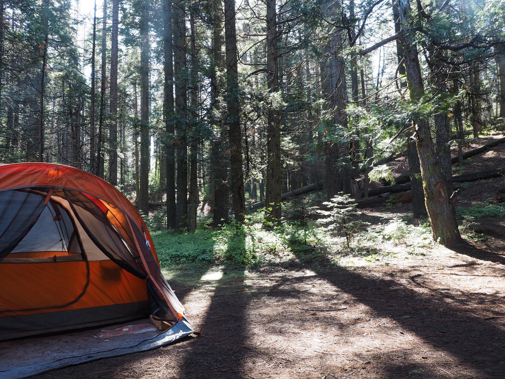 Nelder Grove Yosemite | Kaci Nicole.jpg