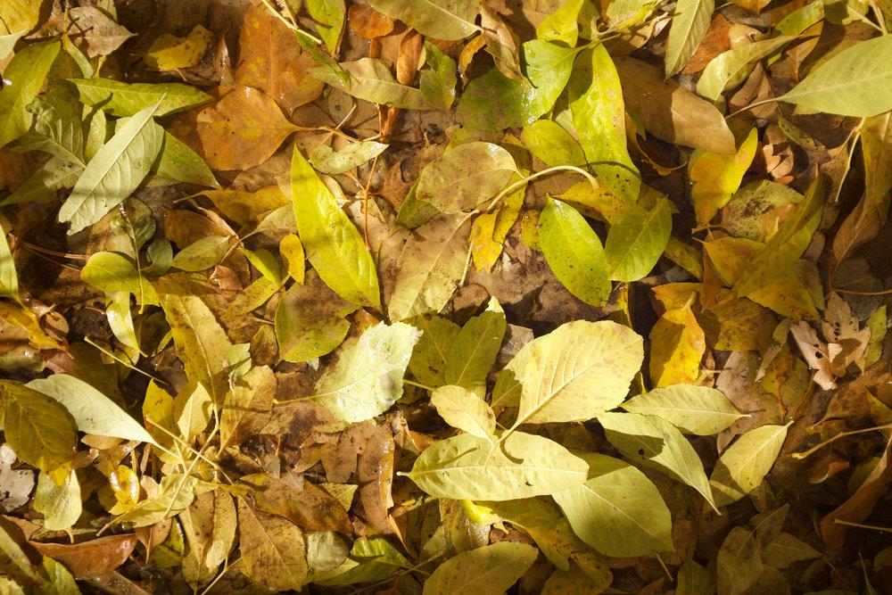 Fall Foliage at Zion | Kaci Nicole.jpg