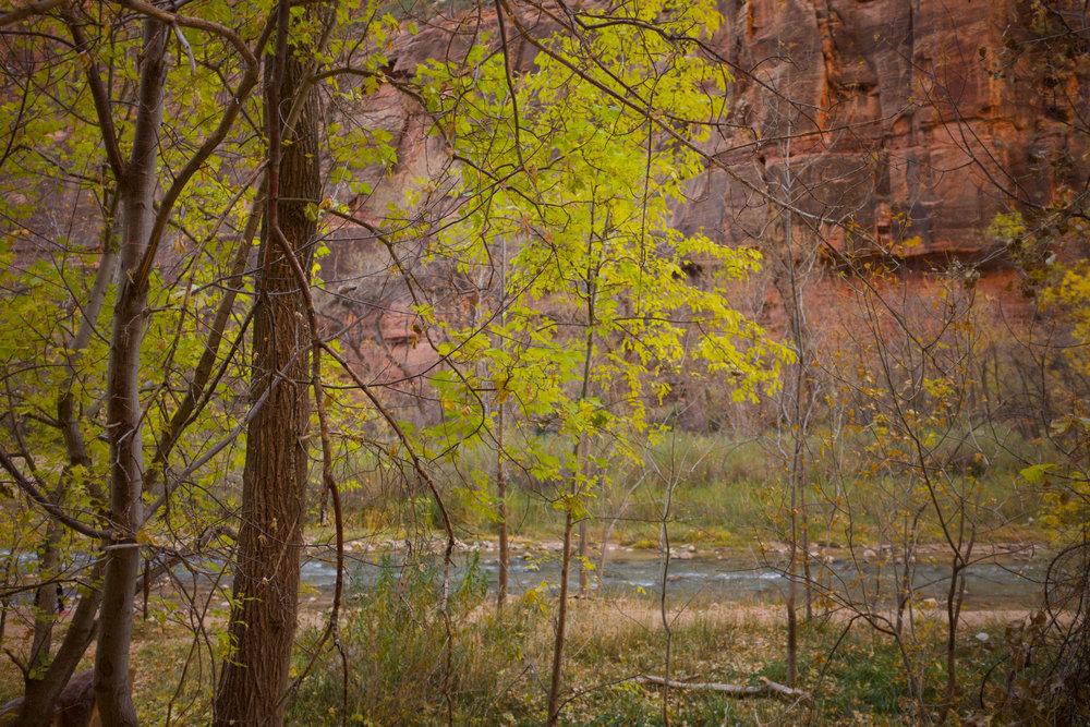 Trees at Zion National Park | Kaci Nicole.jpg