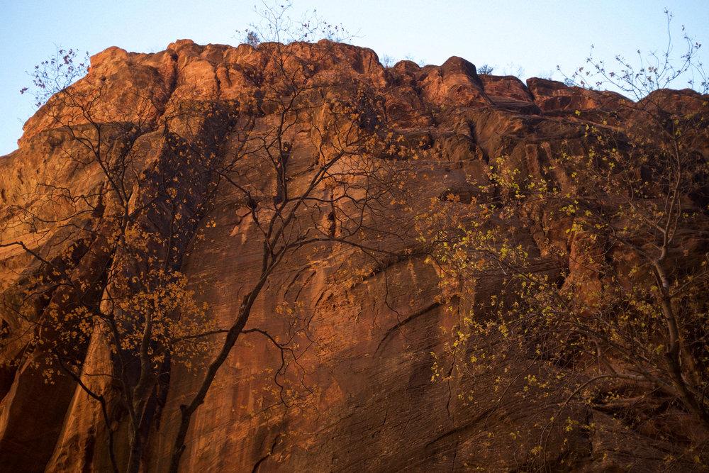 Zion Red Rock | Kaci Nicole.jpg
