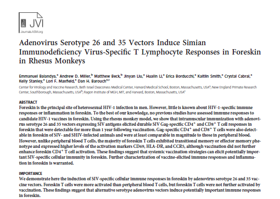 Adenovirus Serotype 26 and 35 Vectors Induce Simian Immunodeficiency Virus-Specific T Lymphocyte Responses in Foreskin in Rhesus Monkeys