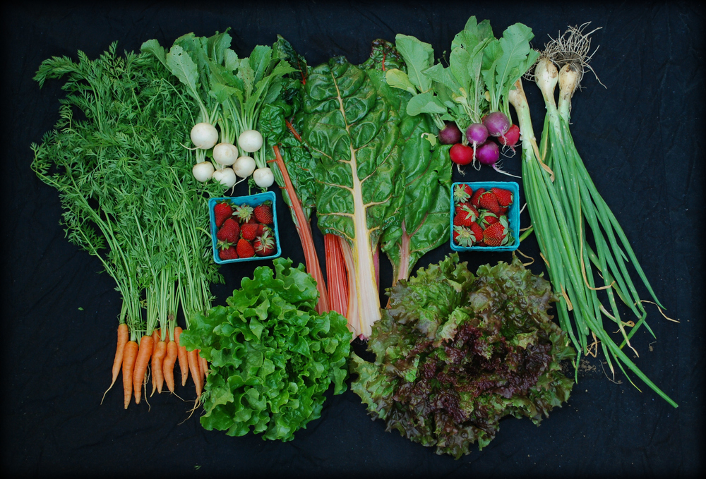 Carrots, salad turnips, strawberries, green leaf lettuce, Swiss chard, radishes, red leaf lettuce, and green onions