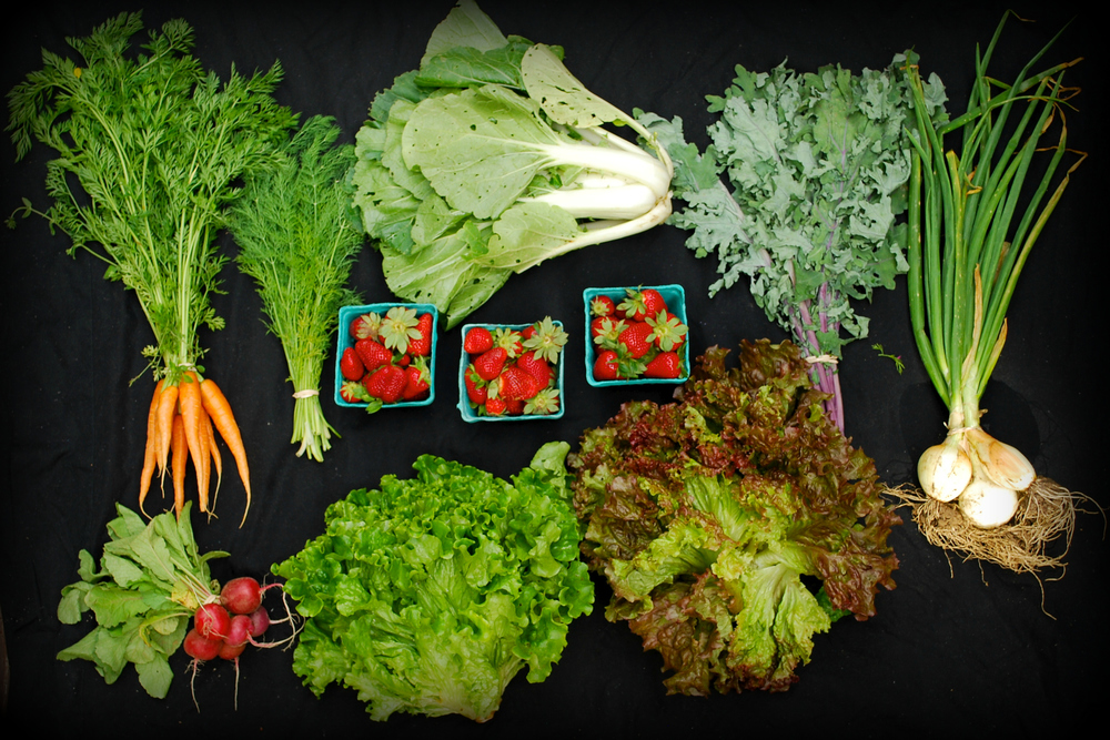 Carrots, radishes, dill, green leaf lettuce, red leaf lettuce, bok choy, red Russian kale, spring onions, and three pints of strawberries